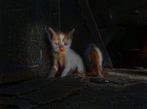 Imagine de stoc gratuită din animal, feline, fotografie de animale, frumusețe naturală