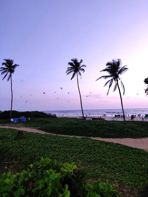 Δωρεάν στοκ φωτογραφιών με άμμος, γρασίδι, δέντρα, δέντρα καρύδας