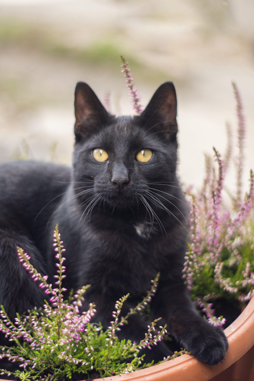 Black Cat on Planters Pot