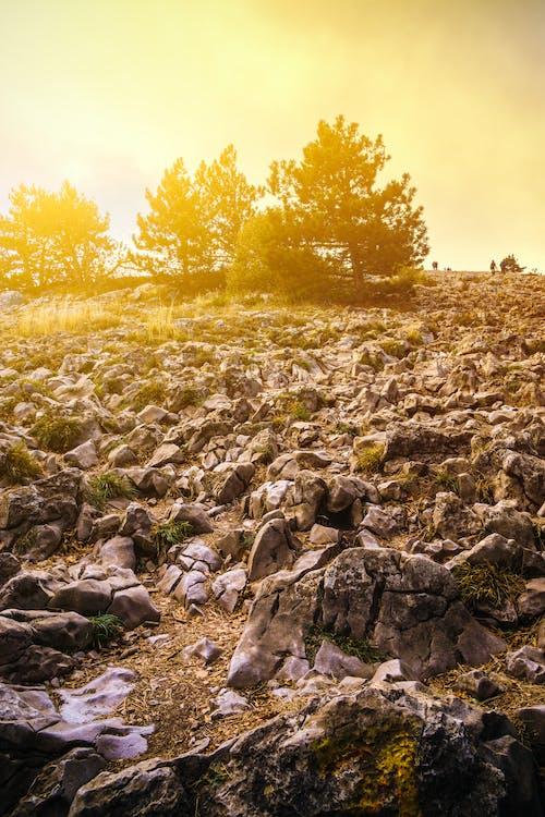 Foto profissional grátis de árvores, cênico, cores, crepúsculo