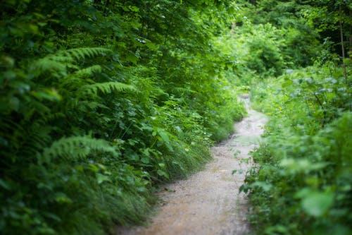 ağaçlar, bitkiler, büyüme, çevre içeren Ücretsiz stok fotoğraf