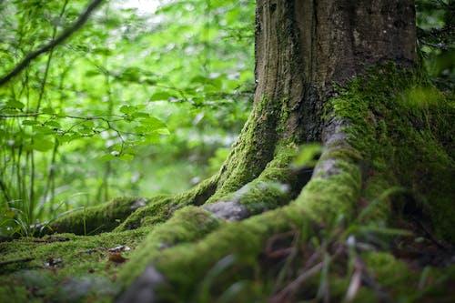 คลังภาพถ่ายฟรี ของ ต้นไม้, ตะไคร่น้ำ, ธรรมชาติ, ป่า