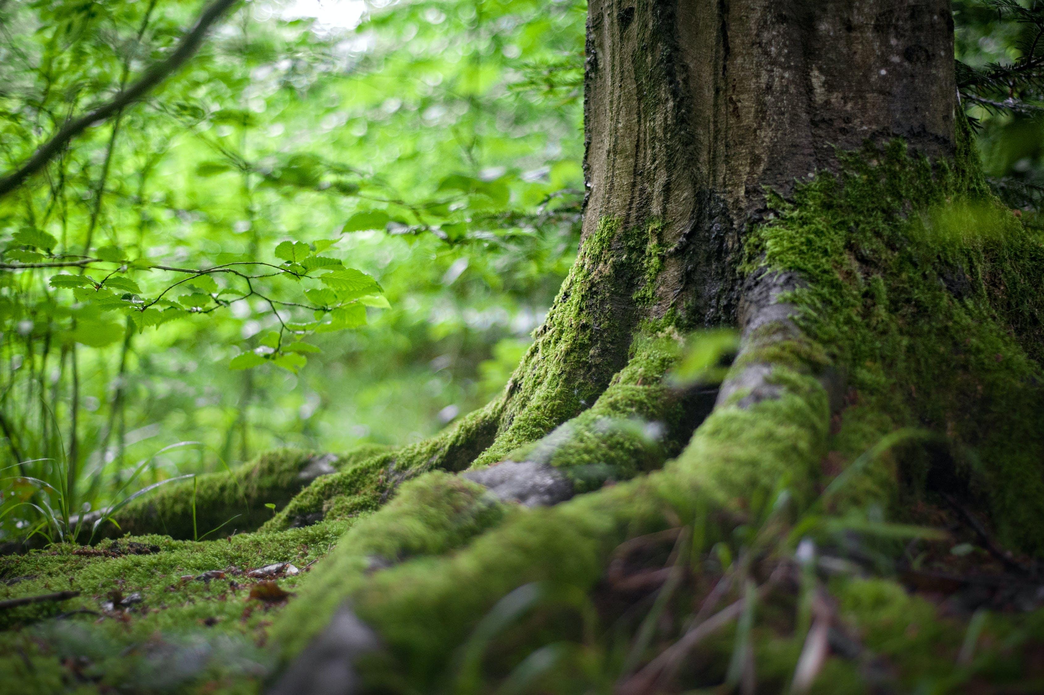 Arbre Vert Près De Plantes Vertes
