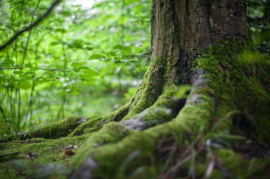 environment, forest, grass