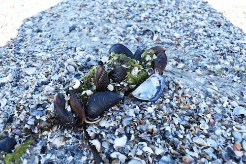 Бесплатное стоковое фото с лето, море, природа, раковины