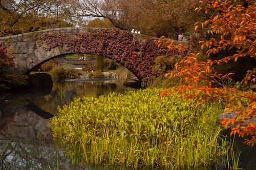 Free stock photo of bridge, colorful, colors of autumn, landscape