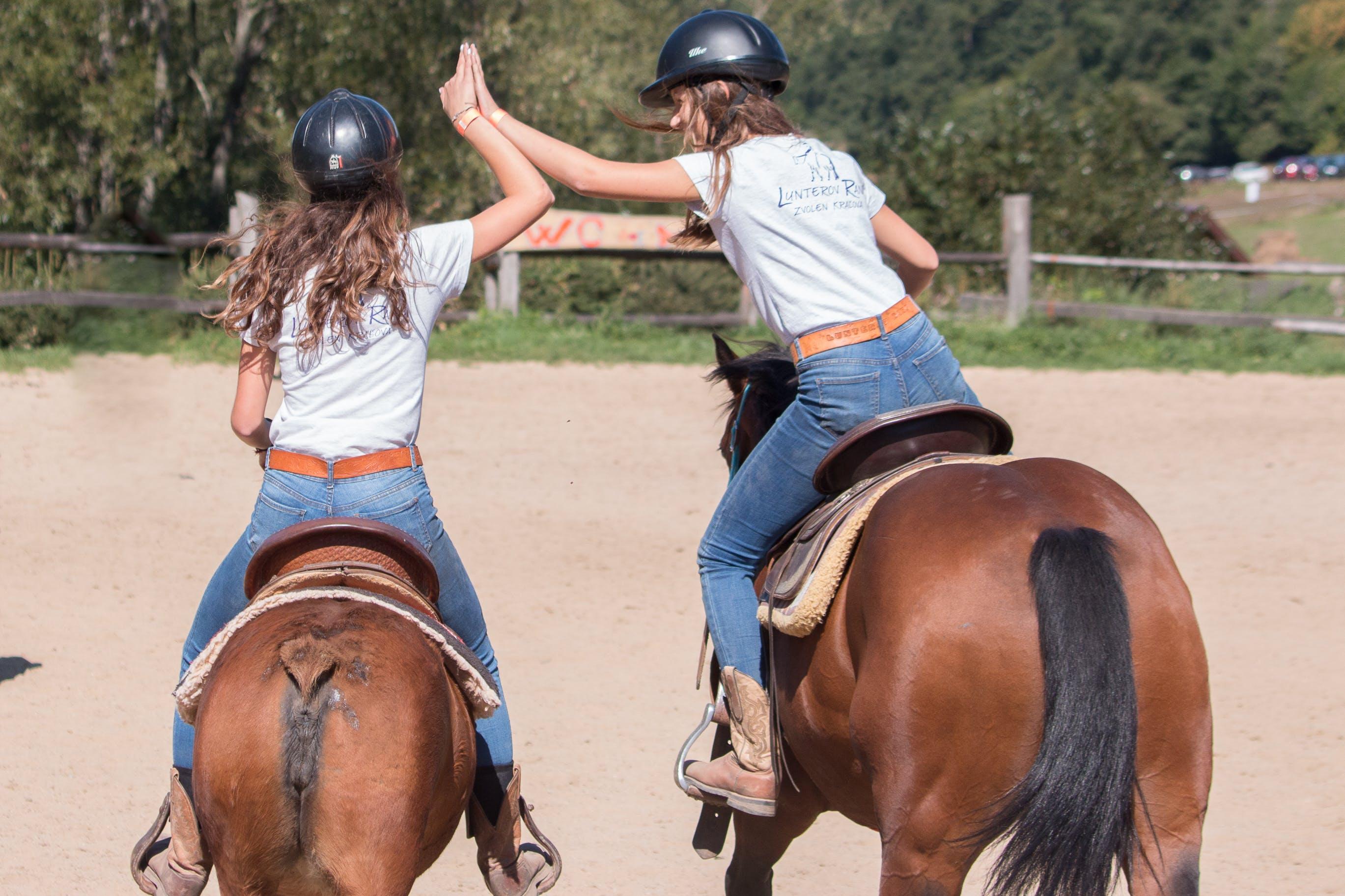 Základová fotografie zdarma na téma jezdectví