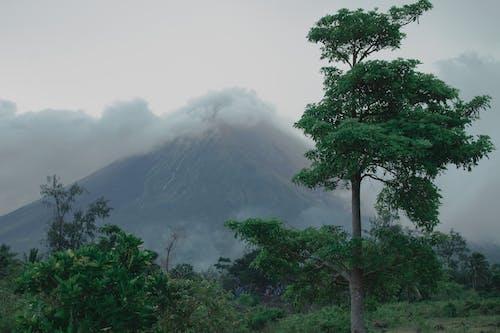 Gratis arkivbilde med dagslys, Mayon, miljø, natur