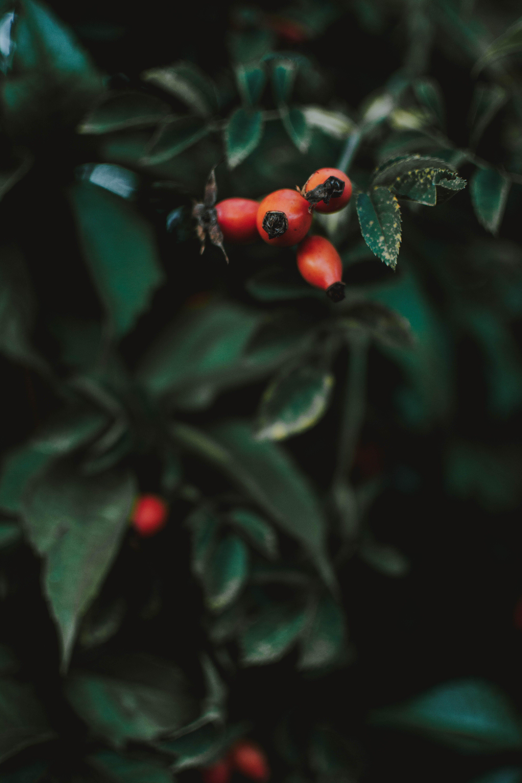 Selective Focus Of Red Berries
