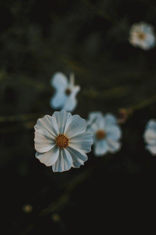 Gratis lagerfoto af blomster, flora, have, kronblade