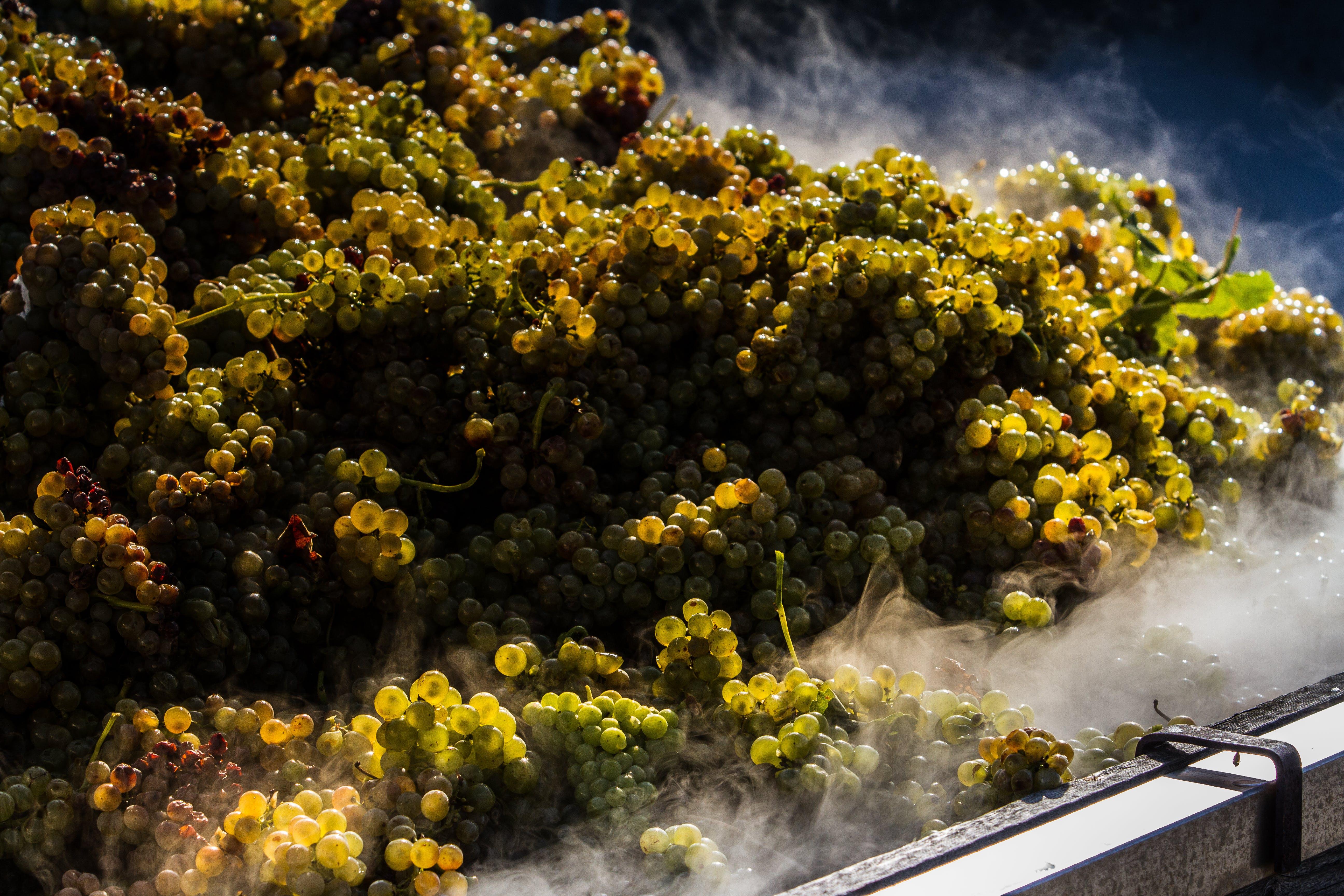 Gratis lagerfoto af drue høst, vin, vingård, vingård i italien
