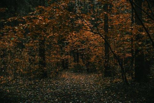Imagine de stoc gratuită din arbori, centrale, codru, lumina zilei