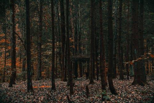 Gratis stockfoto met bomen, Bos, bossen, fabrieken