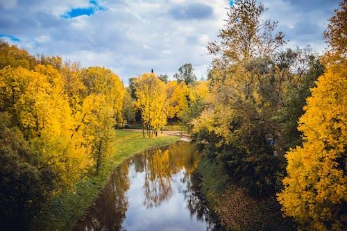 Fotobanka sbezplatnými fotkami na tému HD tapety, les, malebný, park