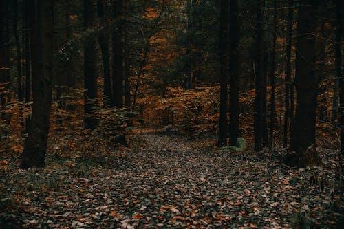 Immagine gratuita di alberi, boschi, foglie secche, foresta