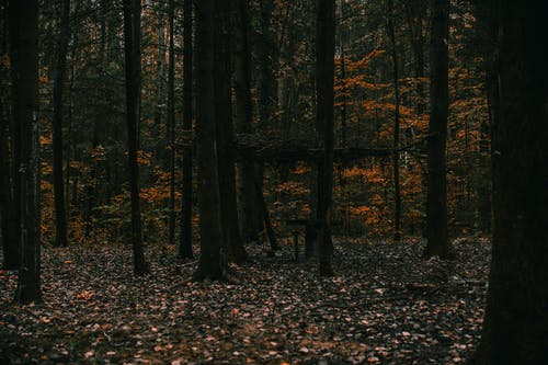 Gratis stockfoto met bomen, Bos, bossen