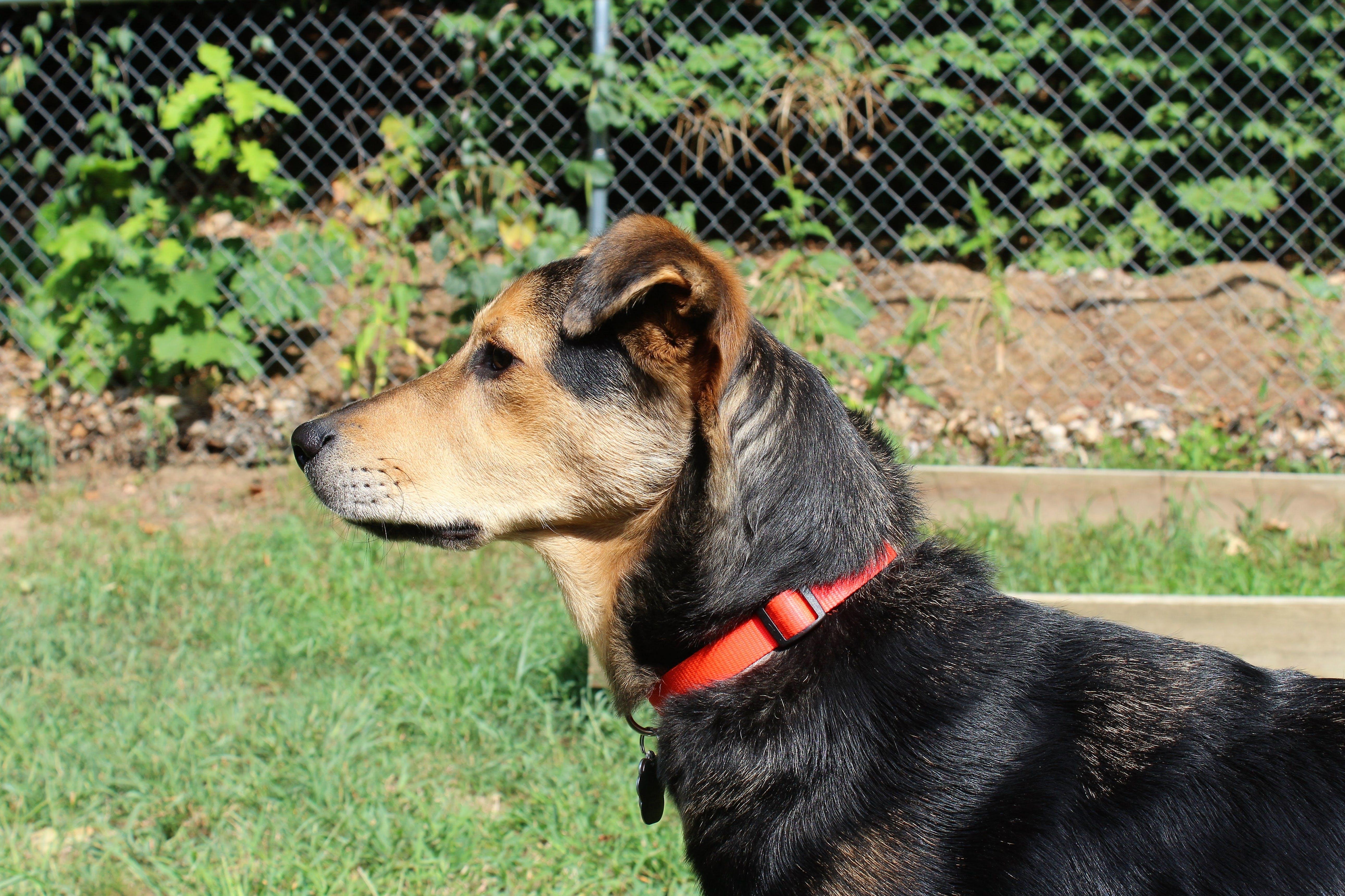 Foto profissional grátis de animal, animal de estimação, cachorro, canino