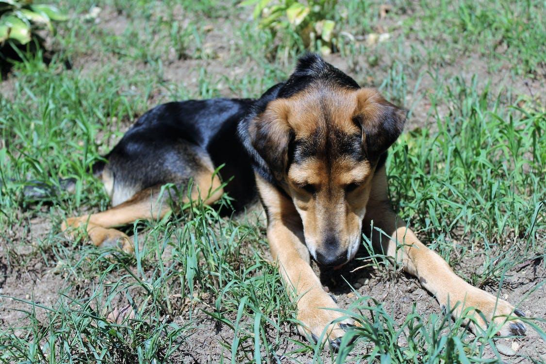 dog, eating, grass
