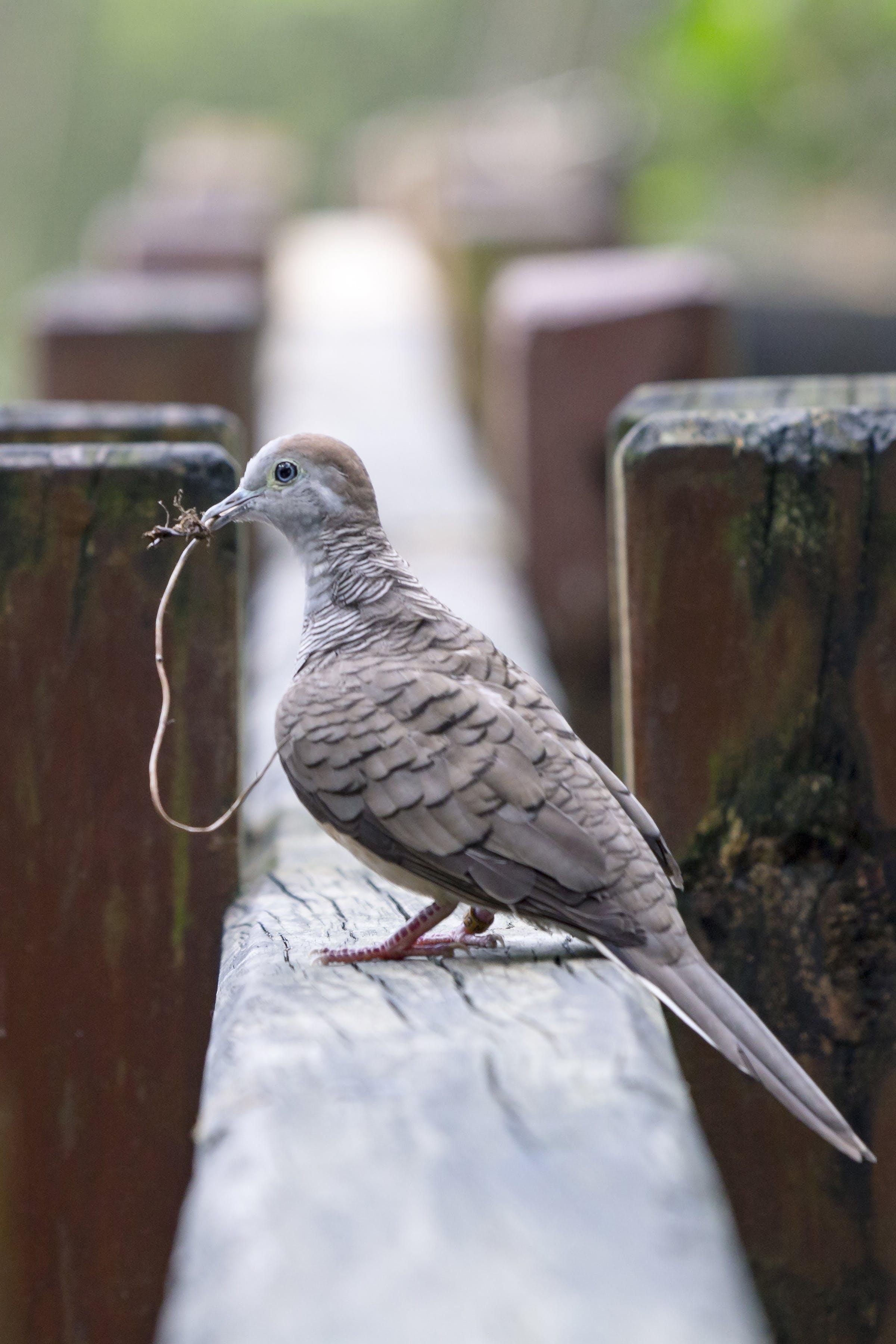 Closeup Photography Of Brown Pigeon