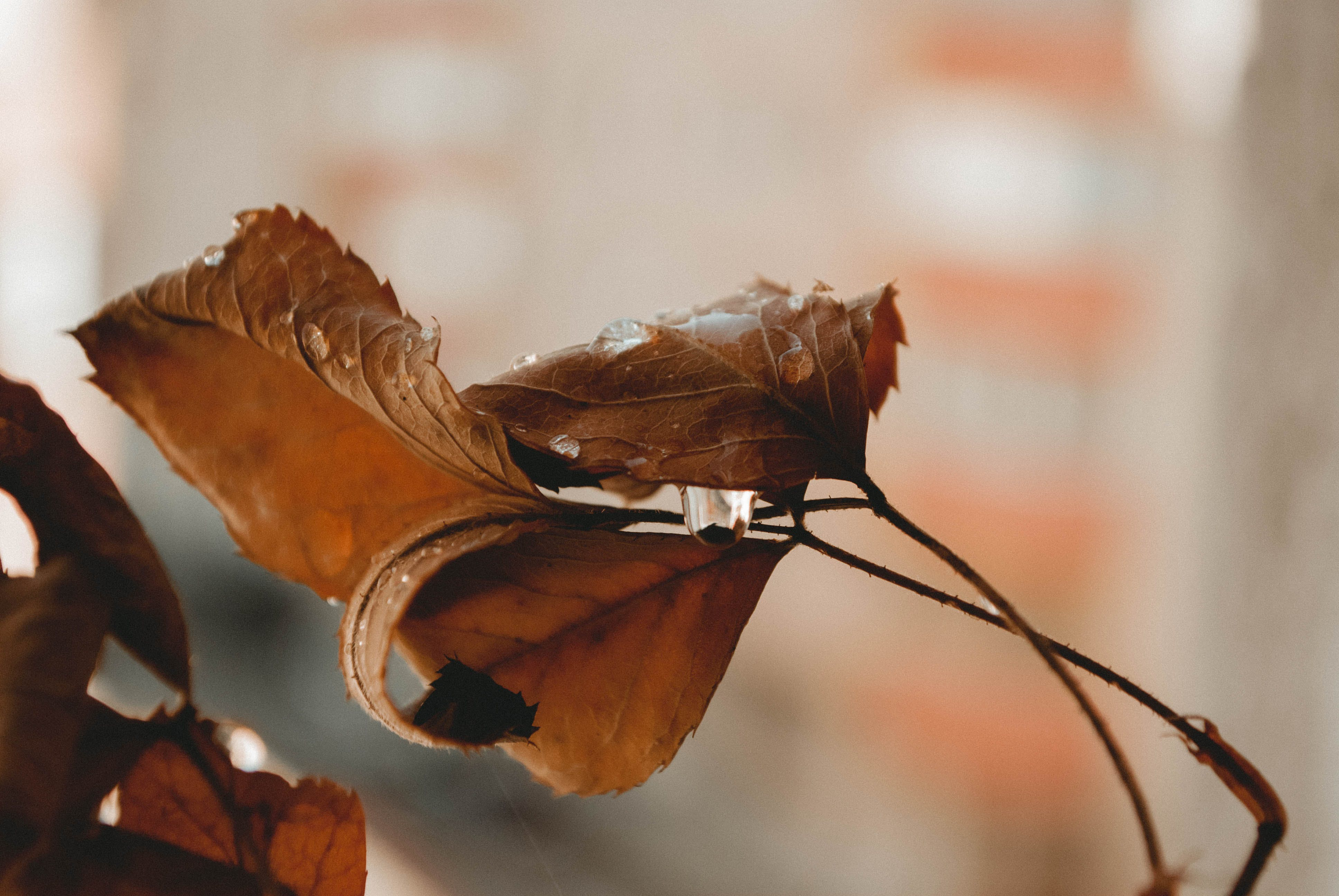 Selective Focus Photo of Dried Leave