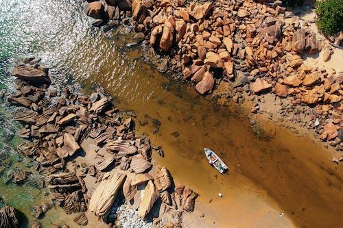 Foto d'estoc gratuïta de aigua, arbre, barca, dia