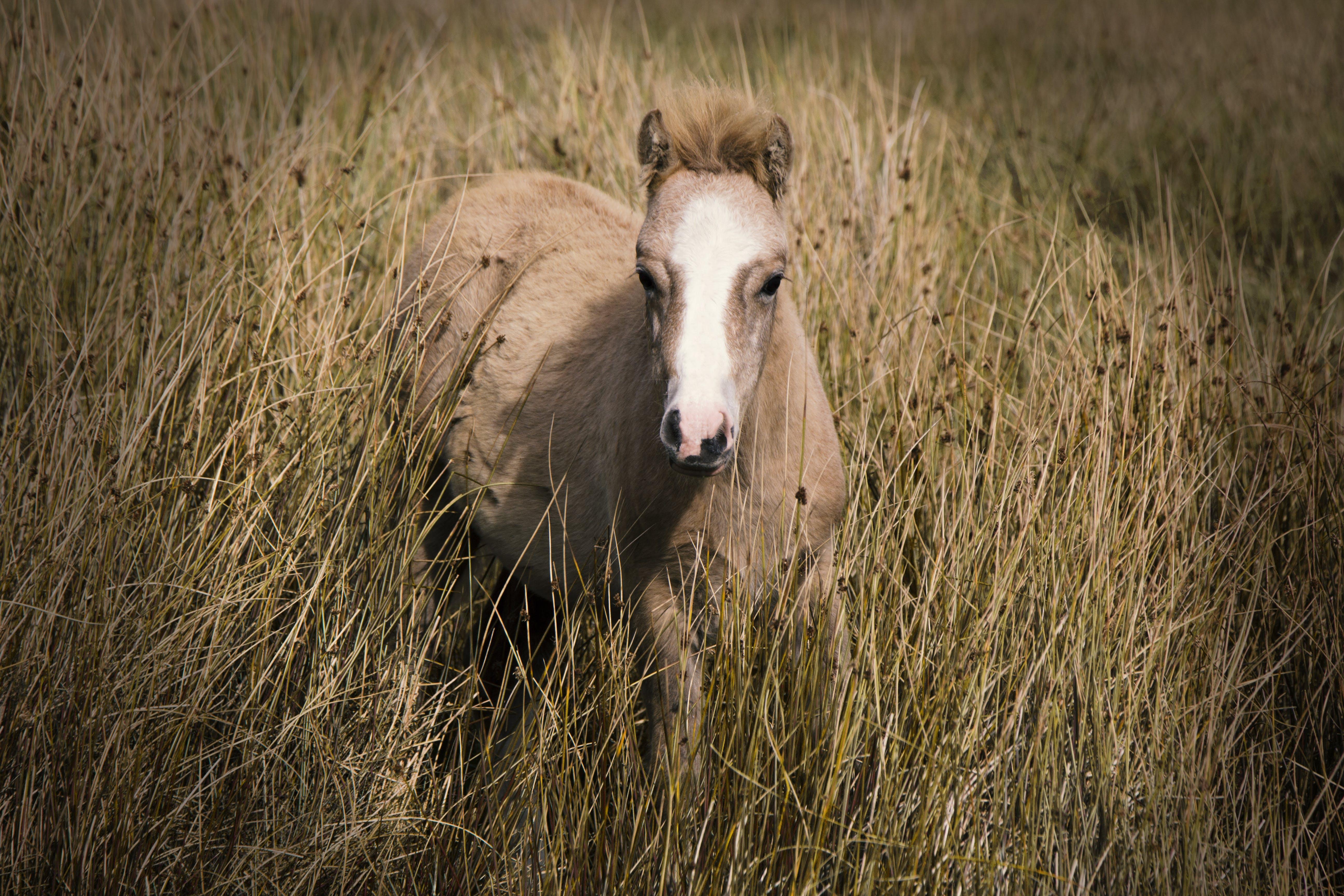 Free stock photo of #outdoorchallenge, beauty, Brecon beacon, horse