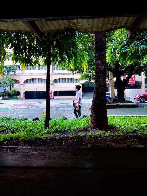Kostenloses Stock Foto zu einsamkeit, gehen, natur