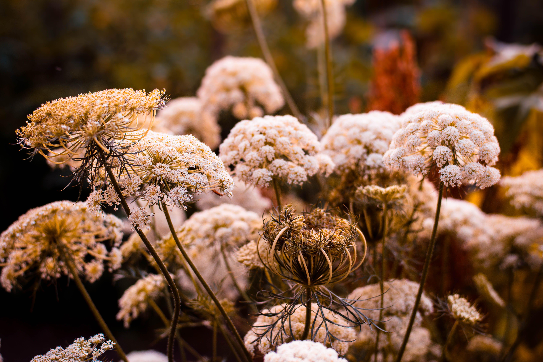 Základová fotografie zdarma na téma barvy, flóra, jasný, květ