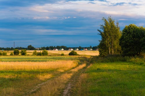 Δωρεάν στοκ φωτογραφιών με αγρόκτημα, άνθος, γαλάζιος ουρανός, γήπεδο