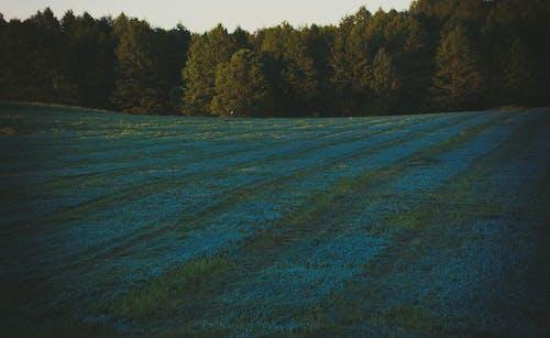 คลังภาพถ่ายฟรี ของ กลางวัน, ต้นไม้, ทุ่งหญ้า, ป่า
