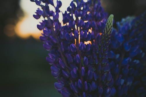 Foto d'estoc gratuïta de bonic, brillant, capvespre, color