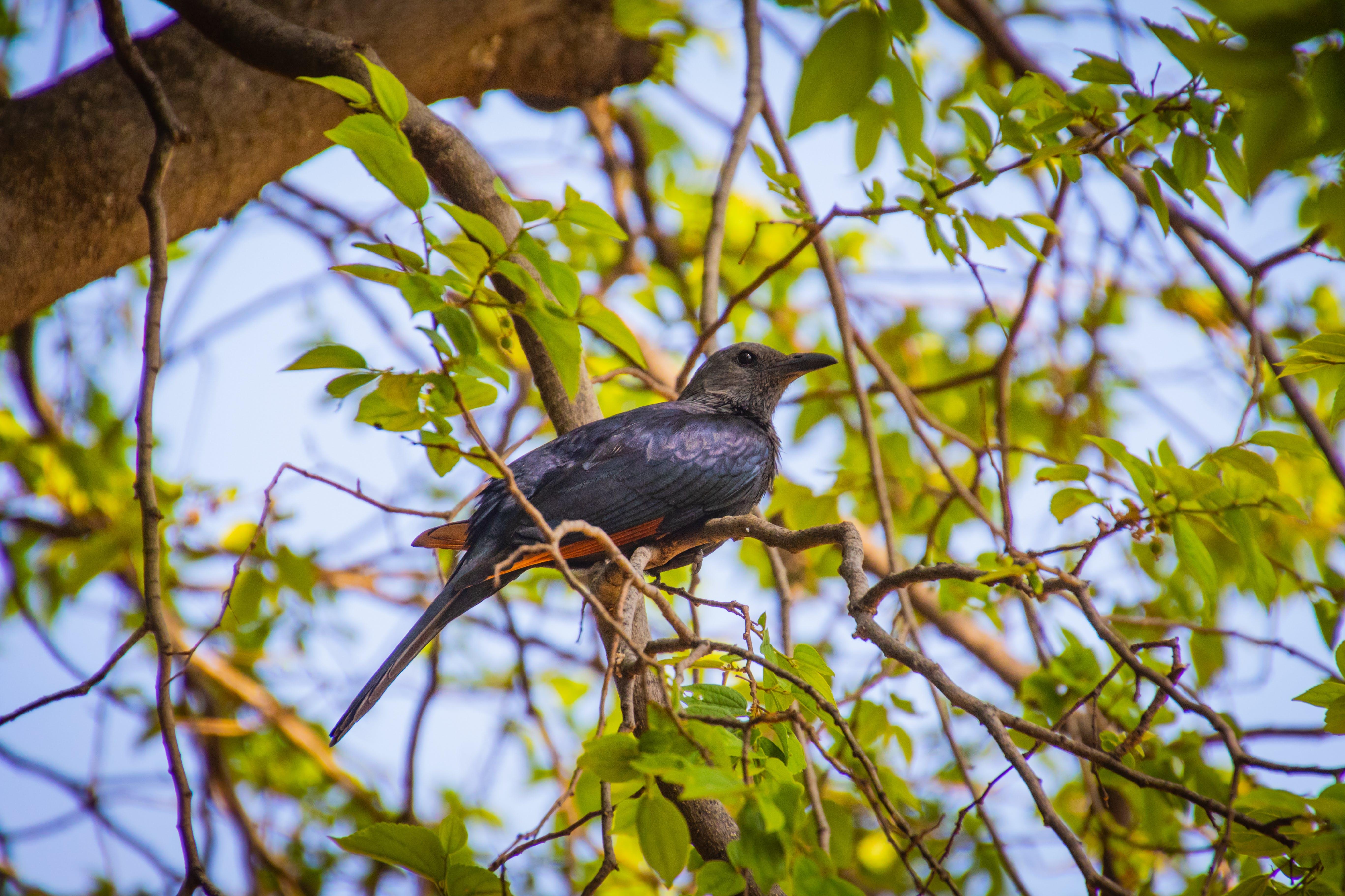 Free stock photo of nature, bird, garden, tree