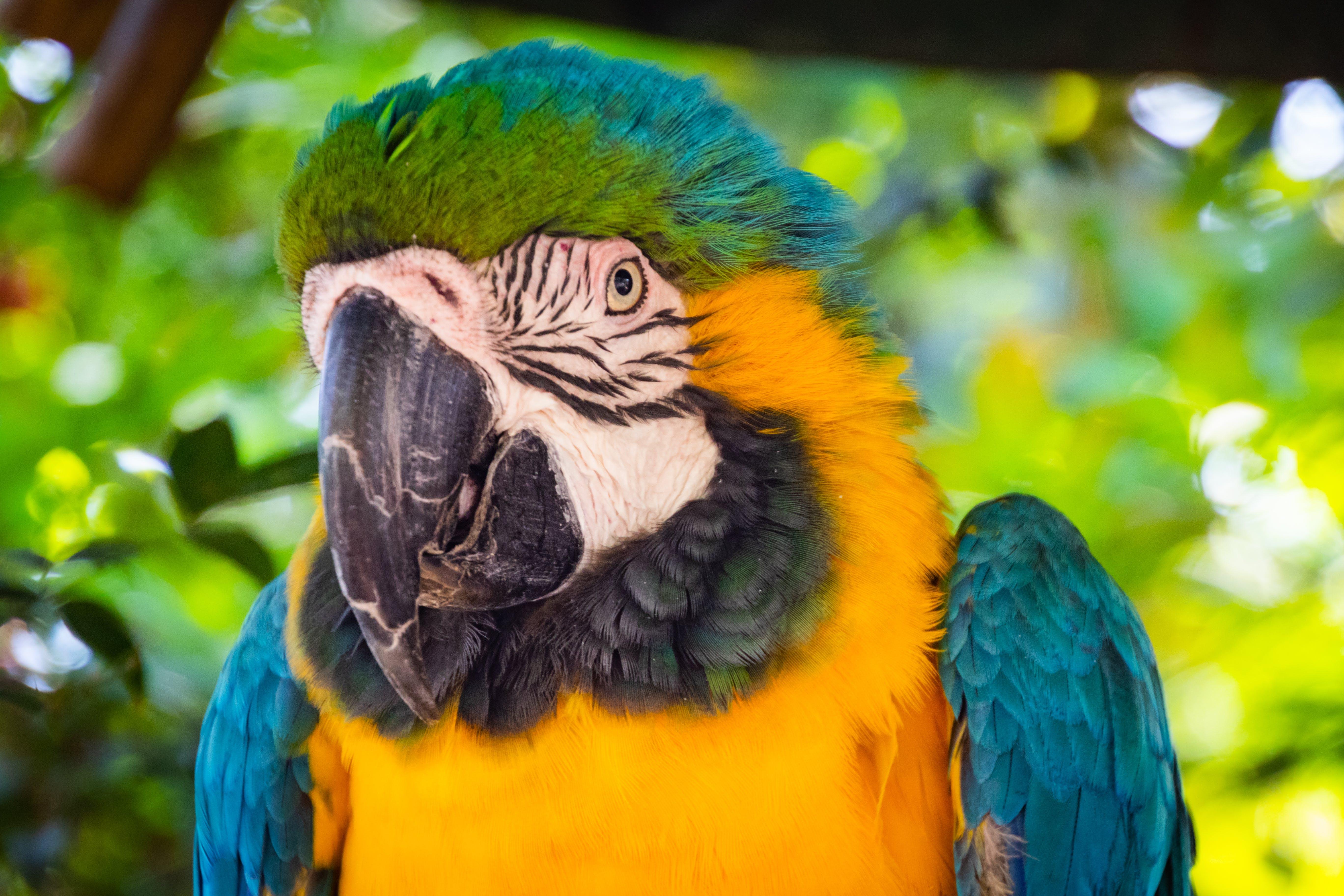 Kostnadsfri bild av ara, djur, djurpark, exotisk