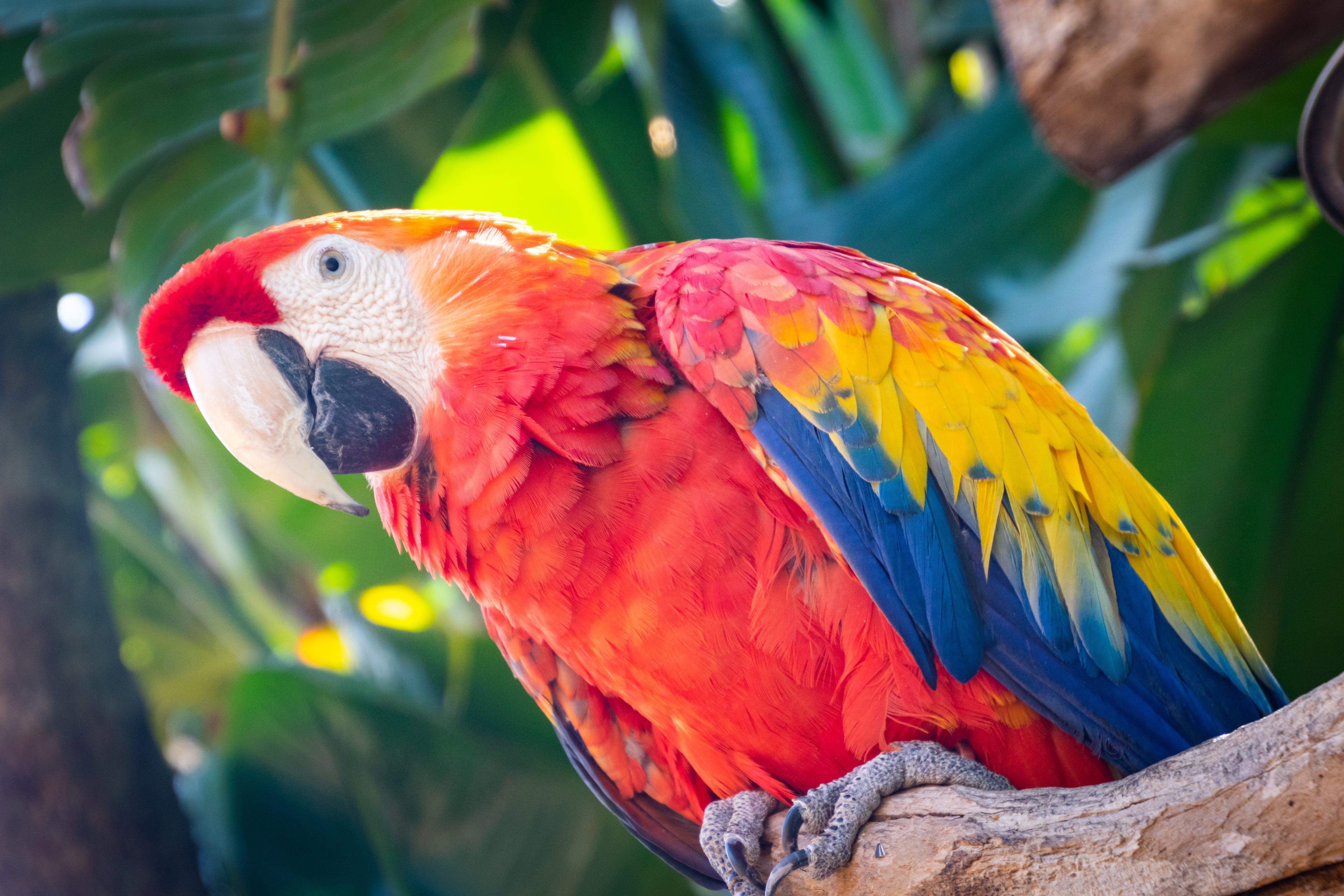 Free stock photo of bird, cute, animals, colourful