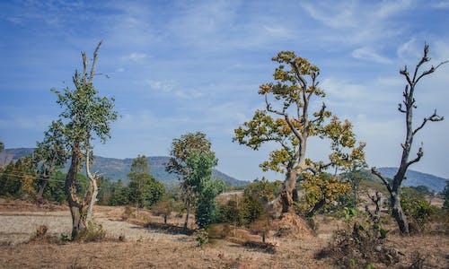 土, 增長, 夏天, 天性 的 免费素材照片