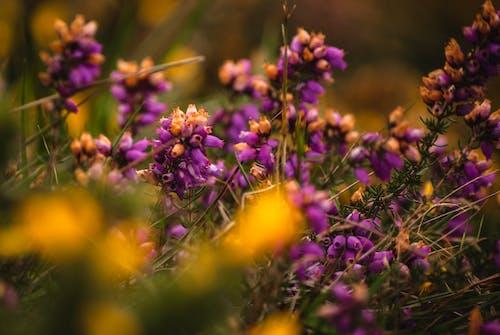 シャープ, テレ, マクロ, 植物の無料の写真素材