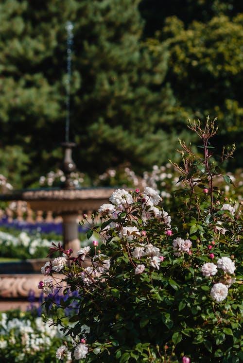 Free stock photo of garden, green, plants, water