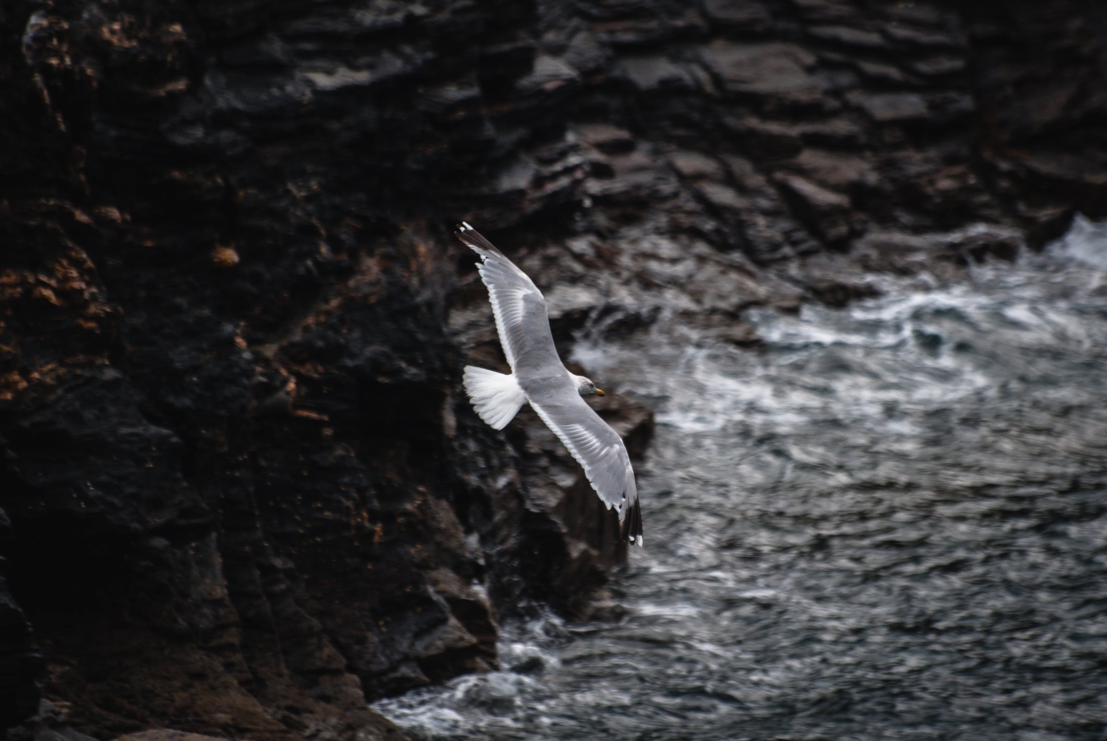 Fotos de stock gratuitas de agua, alas, animal, concentrarse