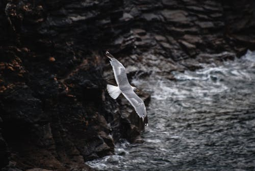Close-UP Photography of Flying Seagull