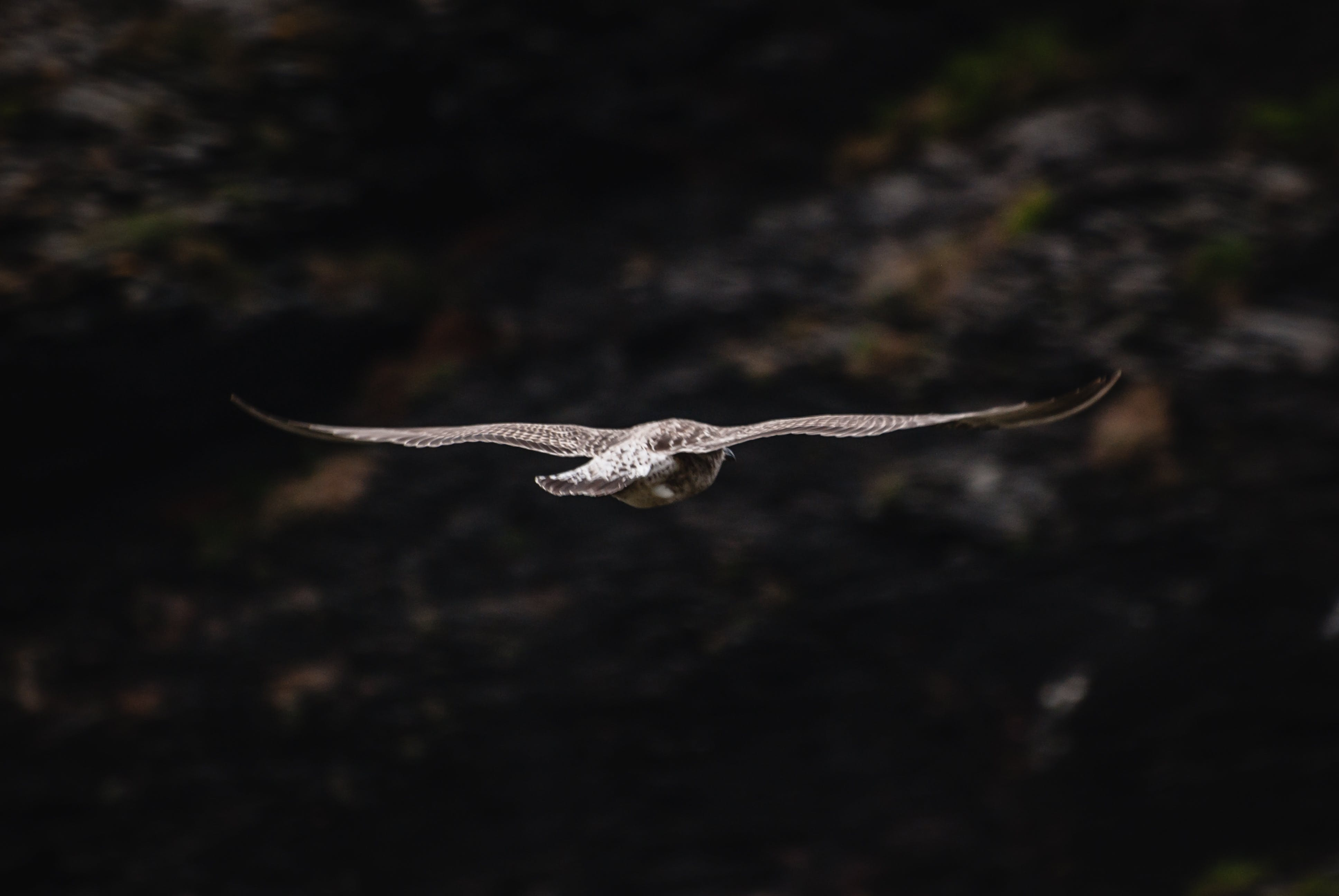 Close-up Photography of Flying Bird