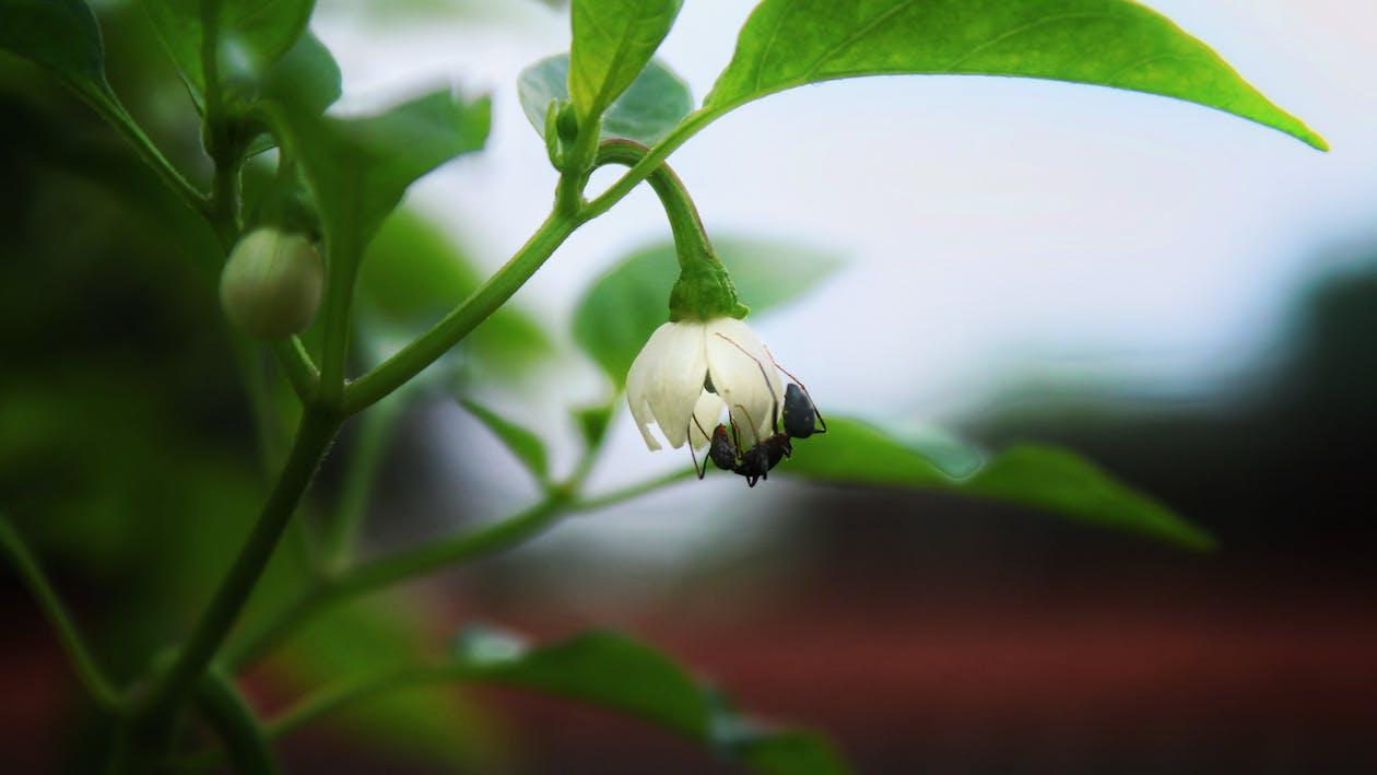 #ant #life #wild