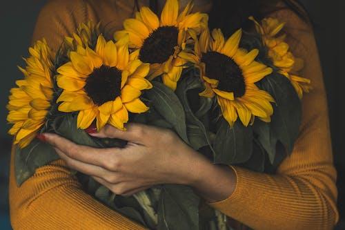 Gratis lagerfoto af blomster, buket, flora, kronblade