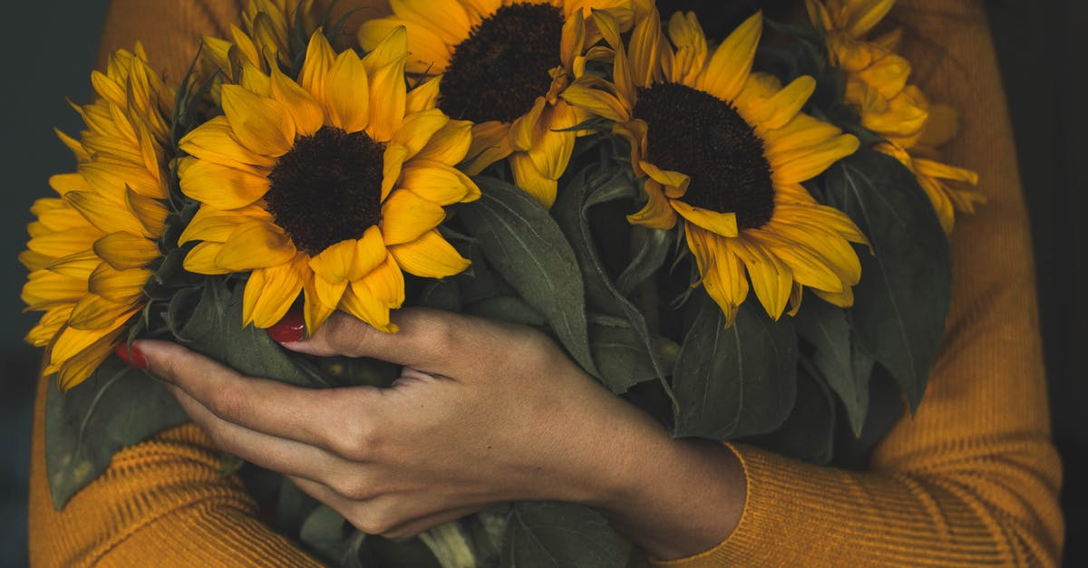 Woman Holding Bunch Of Sunflowers Free Stock Photo