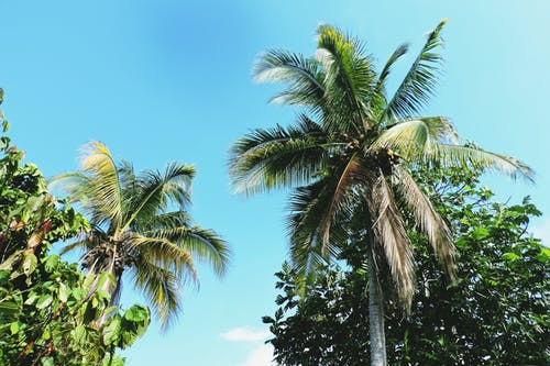 Foto profissional grátis de árvores, coqueiros, folhas de palmeira, fotografia de baixo par acima