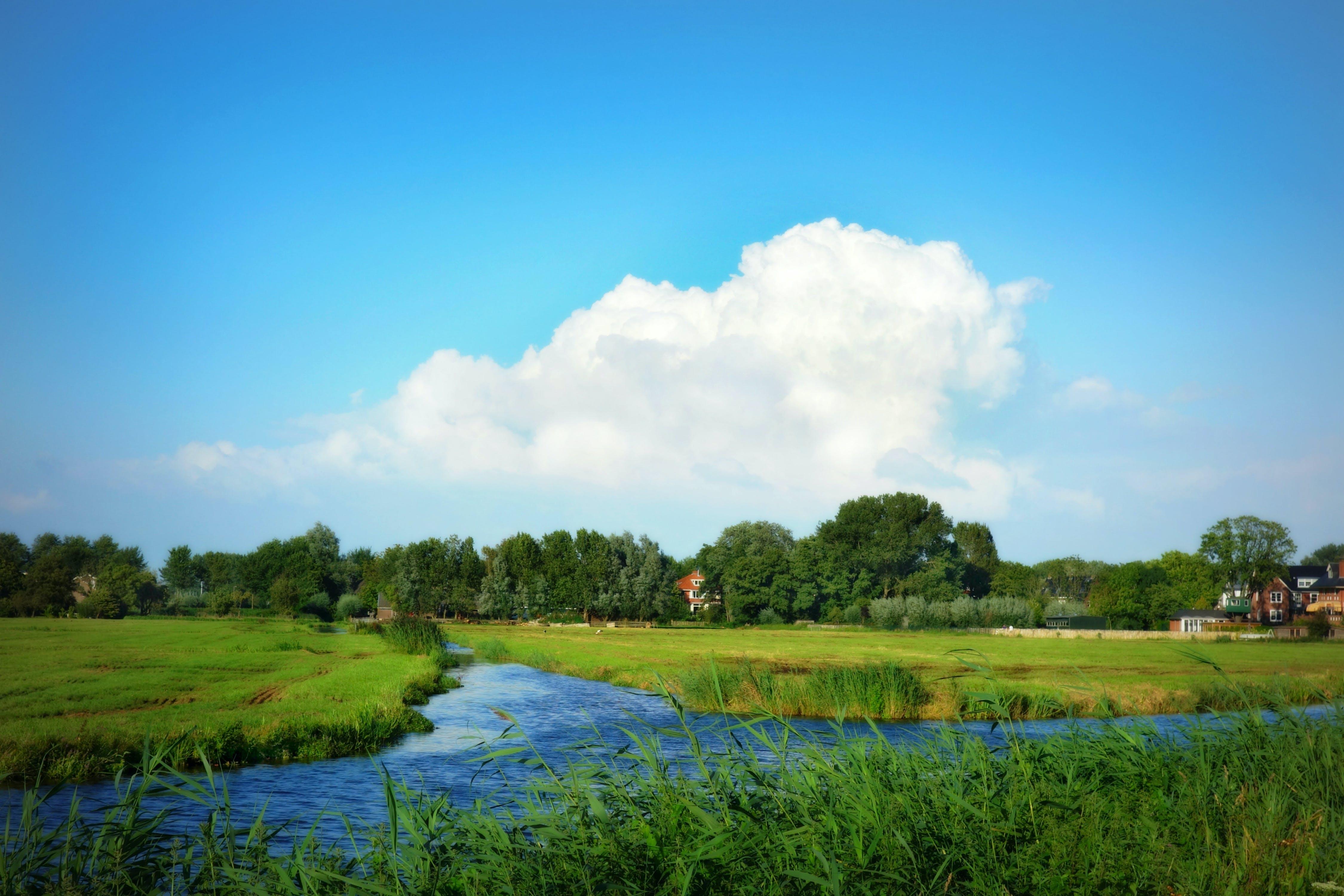 of dutch, flat, grass, green grass