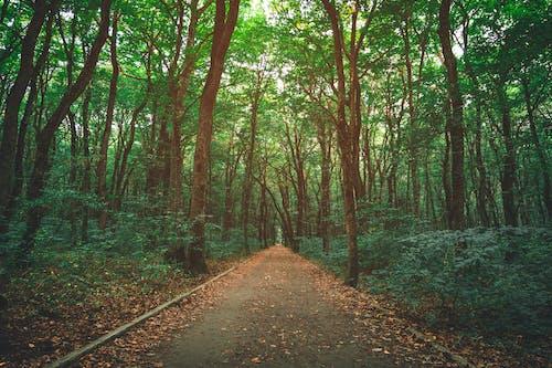 Ingyenes stockfotó erdő, fák, napfény, ösvény témában