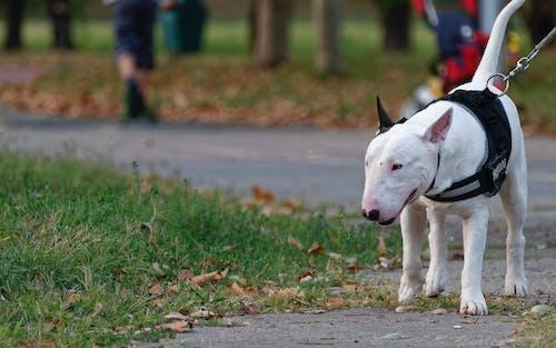 公園, 天性, 枯葉, 狗 的 免費圖庫相片