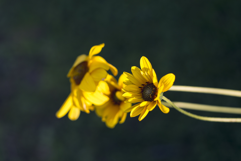 Free stock photo of bloom, flora, flower, garden