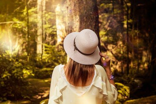 Imagine de stoc gratuită din arbore, blondă, coadă împletită, codru