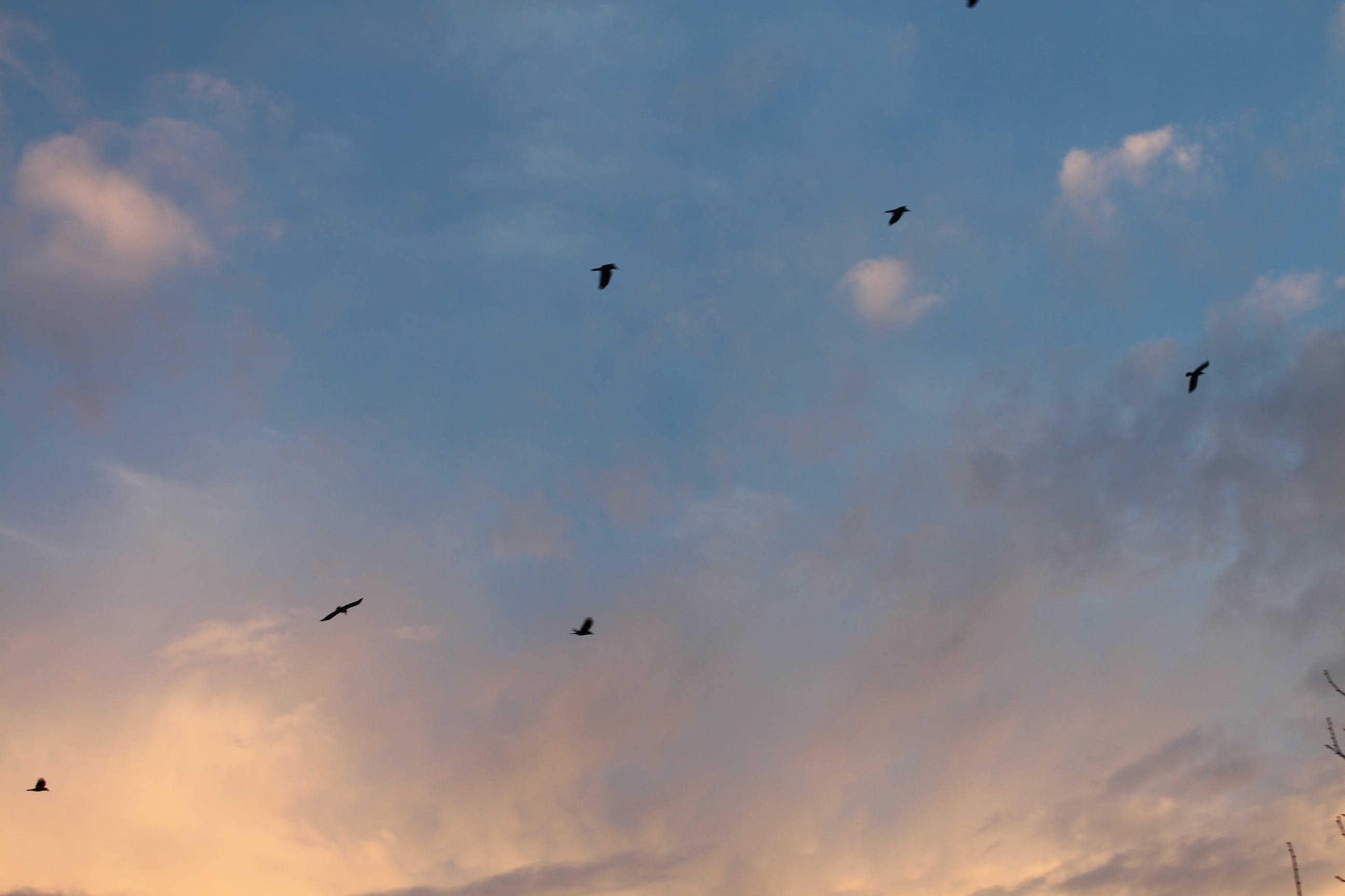 Free stock photo of bird, clouds, dream, freedom